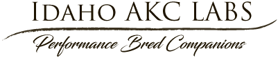 Idaho AKC Labs