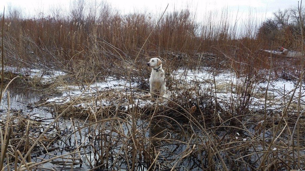 WIllow Duck Hunt